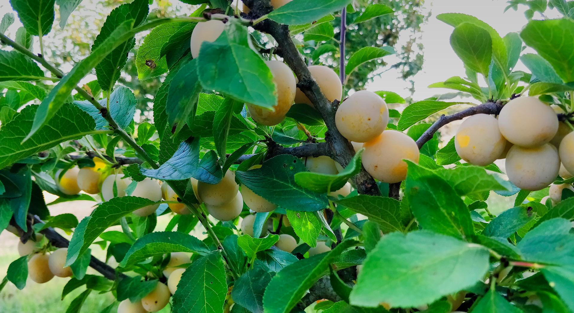 Producteur de fruits et légumes en Tarn et Garonne
