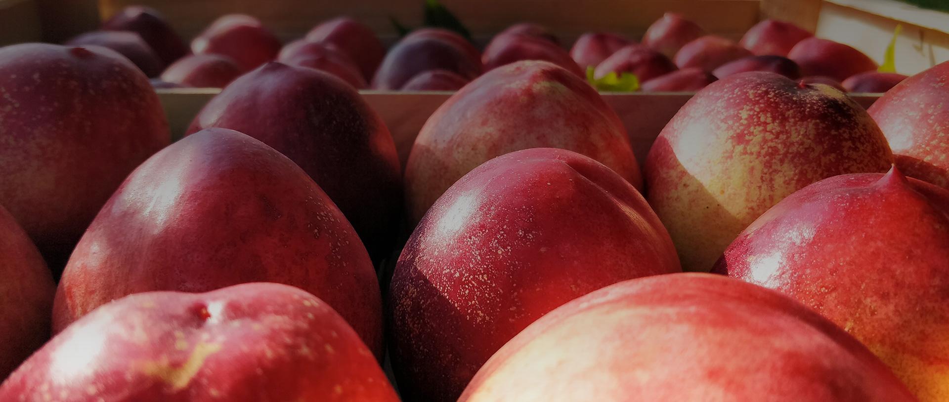 Vente directe de fruits et légumes Tarn et Garonne