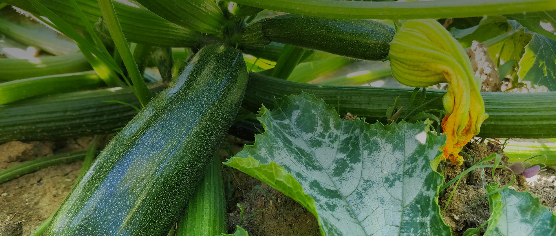 Vente directe de légumes dans le Tarn-et-Garonne