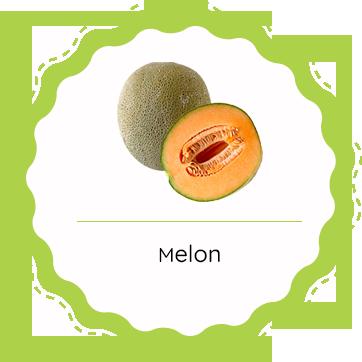 Producteur de fruits et légumes en Tarn et Garonne : Melon